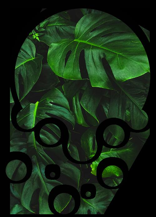 séparateur bulle jungle